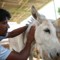 staff-member-roshan-with-rescue-donkey