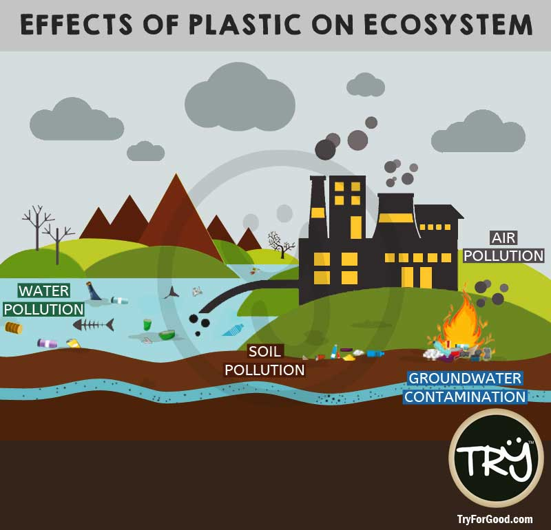 the problem of water degradation within the water based ecosystems Problems with condensed space and waste  can impact the local environment  by polluting the water and smothering plants and animals on the seafloor.